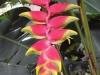 Blumenvielfalt_Uganda_2
