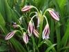 Blumenvielfalt_Uganda_4