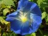 Blumenvielfalt_Uganda_5