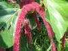 Blumenvielfalt_Uganda_6
