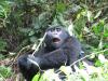 gorillatrekking_uganda9-png