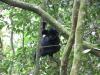 gorillatrekking_uganda5-png