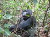 gorillatrekking_uganda4-png
