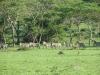 lake_mburo_zebra_uganda4-jpg