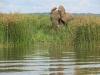 murchisonpark_elefantenbulle_uganda-jpg