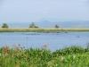 murchisonpark_hippo_uganda2-jpg