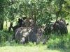 nashorn_reservat_uganda1-jpg