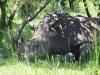 nashorn_reservat_uganda2-jpg