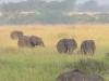elefantenherde_uganda2-jpg