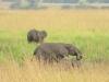 elefantenherde_uganda1-jpg