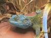 reptil_uganda2-jpg