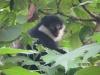 saeugetiere_uganda1-jpg