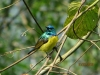 vogelwelt_uganda6-jpg