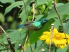 vogelwelt_uganda4-jpg
