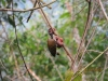 vogelwelt_uganda5-jpg