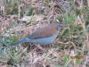 vogelwelt_uganda3-jpg