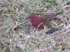 vogelwelt_uganda2-jpg