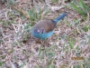 vogelwelt_uganda1-jpg