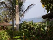 Palmen in Uganda am Victoriasee